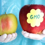 new-gmo-labeling-bill-introduced-by-maryland-legislator