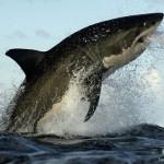 vacancy-shark-scientist-in-kzn