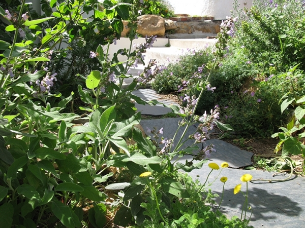 realizing-the-full-potential-of-your-garden