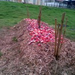 wanted-participants-for-compost-project