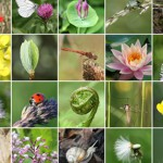 new-network-sees-business-value-in-biodiversity