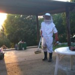 foxglove-organic-stories-pt-5-chicks-and-beekeeping