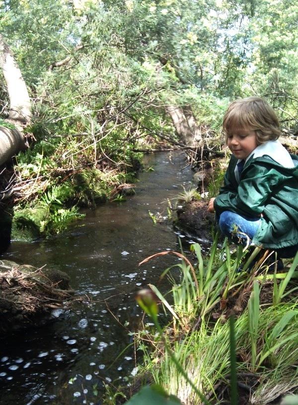 foxglove-organic-stories-pt-7-clearing-the-wattle