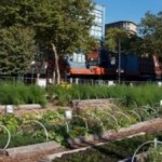 urban-farming-empowers-canada's-poorest-area-code