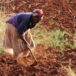 climate-threat-to-southern-africa's-crops