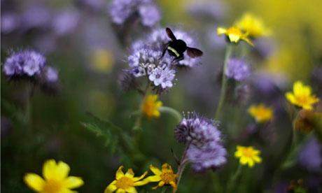 biodiversity-in-business