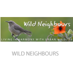 wild-neighbours
