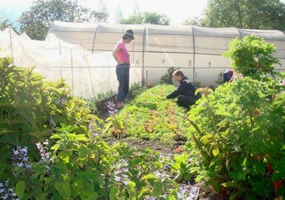 Camphill organic farmers market biodynamic