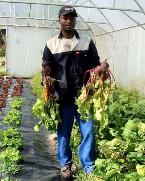 Camphill organic farmers market biodynamic3
