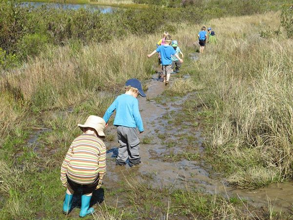 Pond Clearing at the Helderberg Nature Reserve3