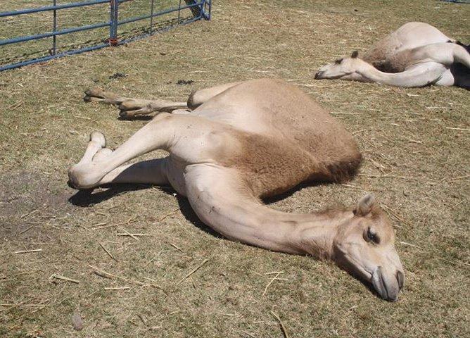 no animals circuses giraffe cruelty
