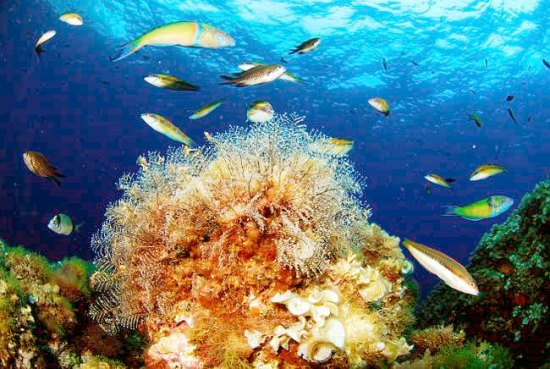 deep-sea-mining-avaaz-petition