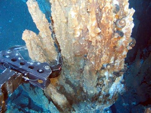 deep-sea-mining-avaaz-petition3