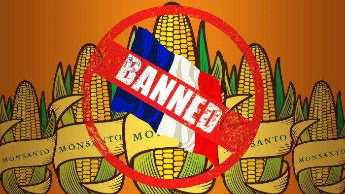 monsanto gmo roundup banned eu africa2