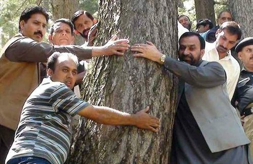 Pakistan forest clearing tree felling hugging