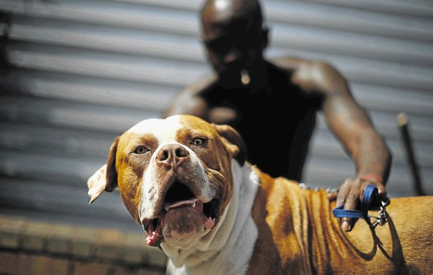 dog fighting must fall cape town green times animal welfare cruelty2