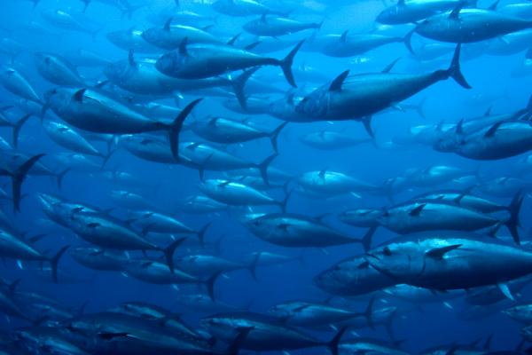 oceans fish marine world water day 2016 green times sea