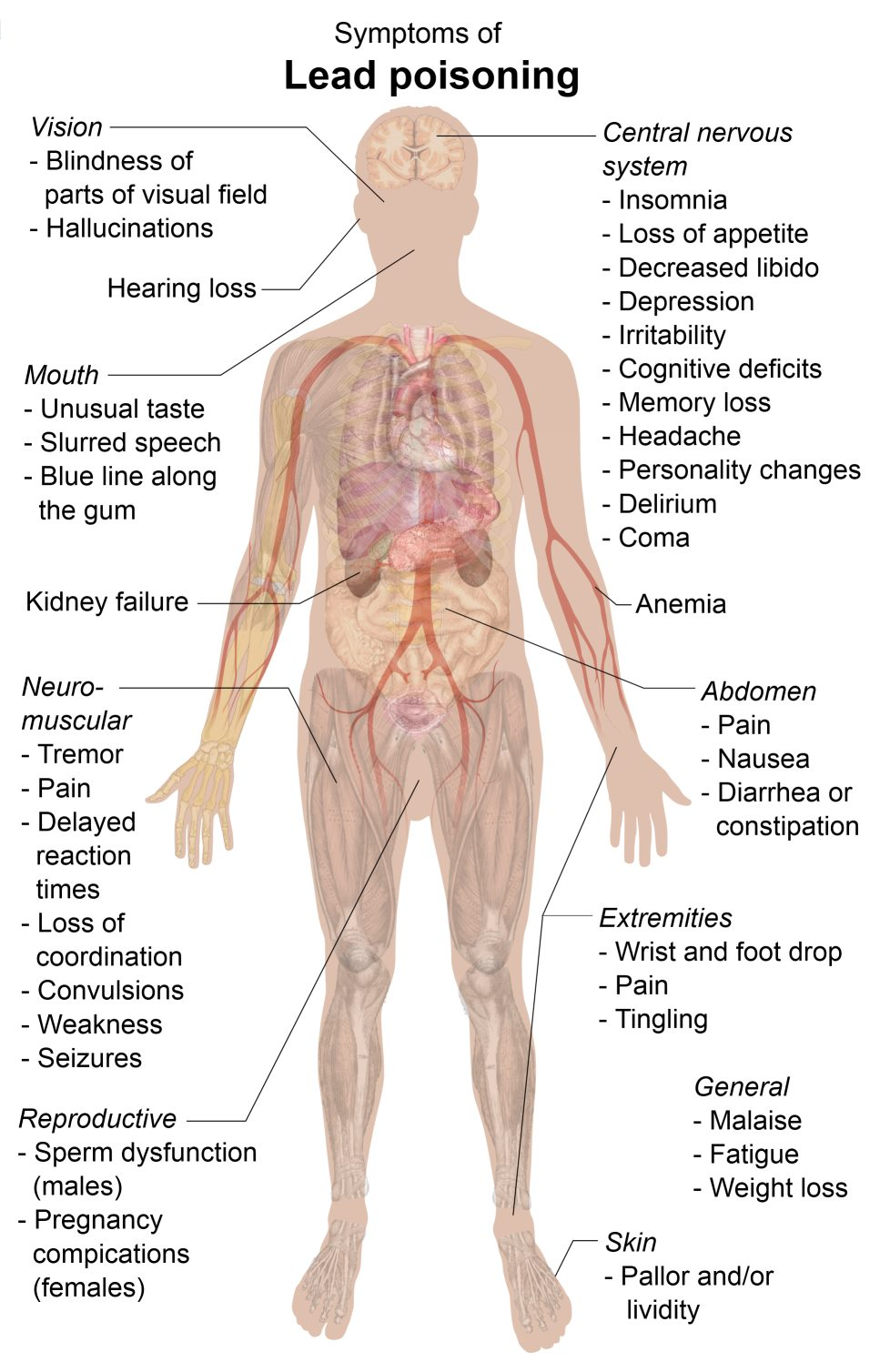 Environmental Toxins That Cause Kidney Disease And Failure
